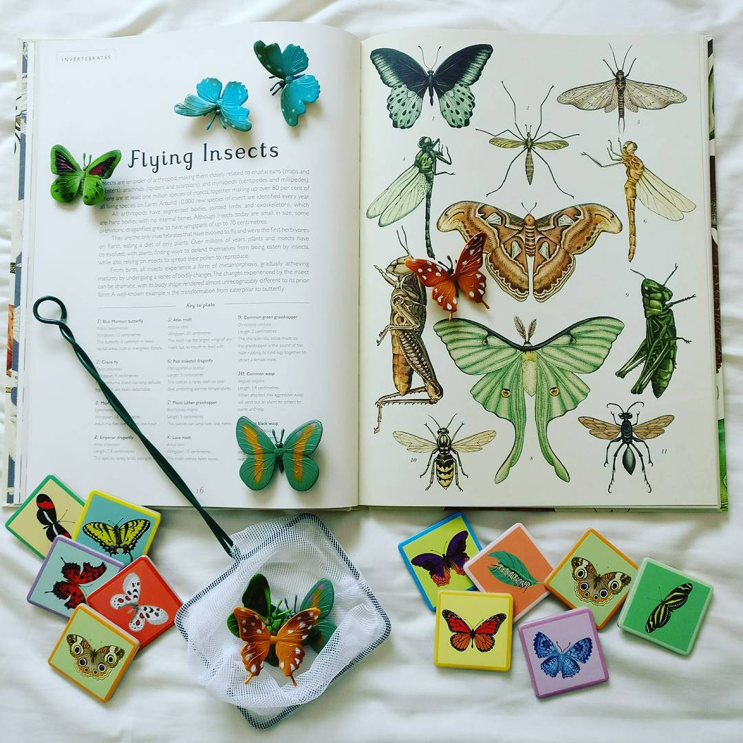 Using some of favourite new resources to talk about butterflies!hellip
